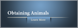 Obtaining Animals