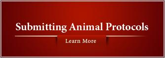 Submitting Animal Protocols