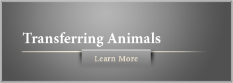 Transferring Animals