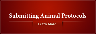 Submitting Animal Protocols